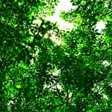 Träd för bakgrund Royaltyfri Fotografi