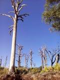Träd för blå himmel för ö Arkivbild