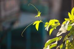 Träd för blad för naturväxtgräsplan Arkivbilder