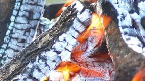 Träd för brandflammavärme lager videofilmer