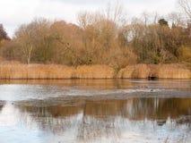 Träd för brunt för sjö för vit himmel för höst mulna och några fåglar på sur arkivbild