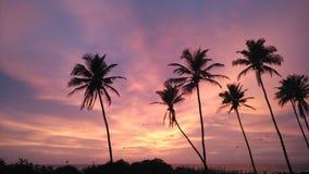 Träd för coco för Colva strandsolnedgång Royaltyfri Bild