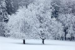 Träd för ensling två i vinter, snöig landskap med snö och dimma, vit skog i backgrouden royaltyfri fotografi