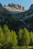 Träd för europeisk lärk i Dolomites Fotografering för Bildbyråer