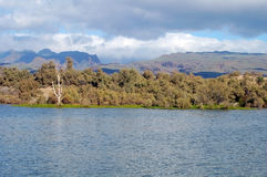 Träd för flodsäng med skogen och berg Arkivfoton