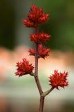 Träd för Florida vårfärg Arkivfoto