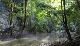 Träd för fuktighet för djungelskogflod Royaltyfri Fotografi
