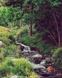 Träd för Gilgit baltistan vattennedgång royaltyfri fotografi