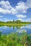 Träd för gräsplan för damm för flod för moln för blå himmel för vårsommarlandskap arkivfoto