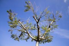Träd för Guararema ` s Royaltyfria Foton