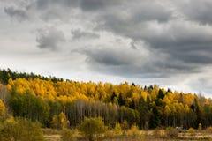 Träd för gul björk under höst royaltyfri foto