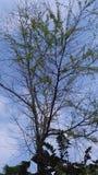 Träd för himmel fotografering för bildbyråer