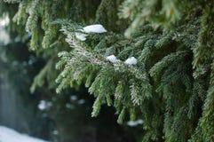 Träd för julvintergräsplan Royaltyfri Fotografi