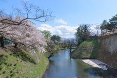 Träd för körsbärsröda blomningar runt om den Tsuruga slotten arkivbild