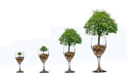 Träd för mynt för hand för pengar för glass förhöjning för isolat för trädmynt sparande som trädet växer på högen Besparingpengar royaltyfri bild