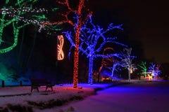 Träd för Niagara Falls Dufferin ljusfestival Arkivfoton