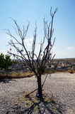 Träd för ont öga för Cappadocia landskapblått Arkivbilder