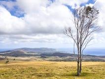 Träd för påskö Royaltyfri Bild