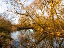 Träd för plats för flod för höstvintersjö som kala hänger över reflectin Arkivbilder