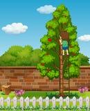 Träd för pojkeklättringäpple Arkivbild