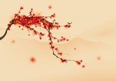 Träd för röd lönn i höst Arkivfoton