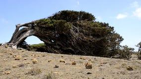 Träd för Sabina ` s lager videofilmer