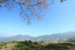 Träd för siden- bomull royaltyfri fotografi
