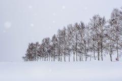 Träd för sju stjärnor i vinter med snönedgången på den Biei patchworkvägen, Hokkaido, Japan arkivbilder