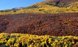 Träd för skog för höstsaga färgrikt Arkivfoton