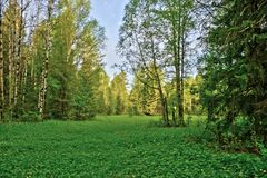 Träd för skoglandskapnatur Royaltyfria Foton