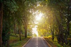 träd för skogväg along på landssidan i Thailand Arkivbild
