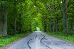 Träd för skogvägen längs på bygden, bildäckdäck spårar spår på vägen, skugga för skogträd fotografering för bildbyråer