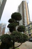 Träd för skyskrapa för landskapdesign modernt Royaltyfria Foton