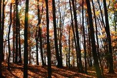 Träd för stenbergdelstatspark Arkivfoto