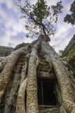 Träd för Ta Prohm Royaltyfria Foton