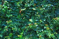 Träd för tapet Royaltyfri Fotografi