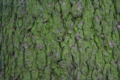 Träd för texturskällgräsplan Arkivfoton