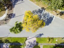 Träd för trafikö från över Royaltyfria Bilder