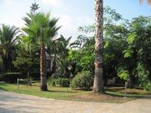 """Träd för tropisk trädgårds- †"""", gömma i handflatan svart sikt för kalkon för naturfotoregion hav tagen royaltyfria bilder"""