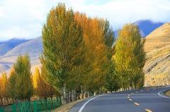 Träd för vägtur och färg Royaltyfri Bild