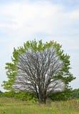 Träd för vinter och vårfrån inre till yttersidan Arkivfoto