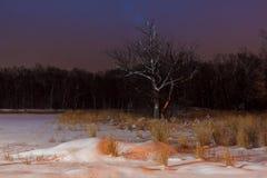 träd för vinternattsnö som täckas fortfarande med royaltyfri bild