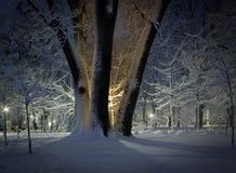 Träd för vintertid i en parkera på natten Fotografering för Bildbyråer