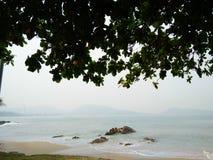 träd för viwe för havspuketpatong Royaltyfri Bild
