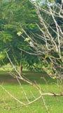 Träd, filialer och en fågel arkivfoto