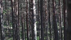 Träd, filialer, skogen och mossa täckte banan arkivfilmer