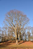 Träd finland royaltyfria foton