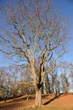 Träd finland arkivbild