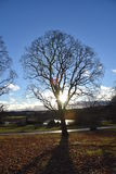 Träd finland royaltyfria bilder