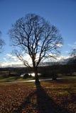 Träd finland Royaltyfri Bild